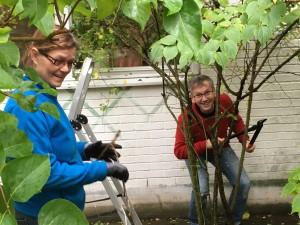Birgitta och Stig jobbar med beskärning